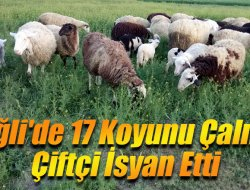 Ereğlide 17 Koyunu Çalınan Çiftçi İsyan Etti