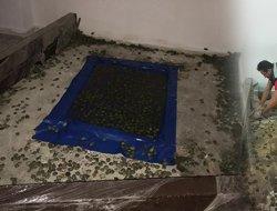 2 bin 500 kaplumbağa ele geçirildi