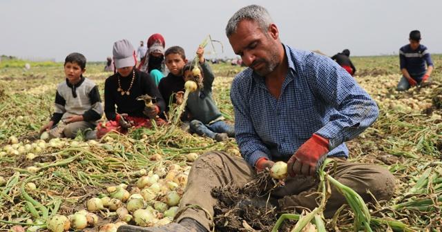 Tarım ÜFE  Aralıkta yıllık yüzde 16,07 arttı