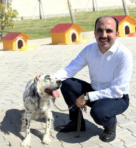 """""""gonullu-hayvan-dostlari-projesi""""-turkiye'ye-ornek-oluyor.jpg"""