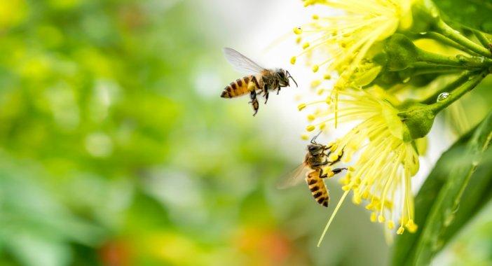 yaz-mevsiminde-tetiklenen-bazi-alerjiler-tum-yil-bekledigimiz-tatile-golge-dusurebiliyor-002.jpg