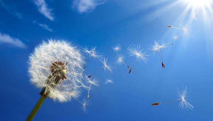 yaz-mevsiminde-tetiklenen-bazi-alerjiler-tum-yil-bekledigimiz-tatile-golge-dusurebiliyor.jpg
